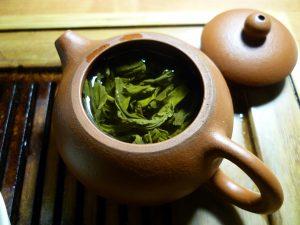 cultiver le thé